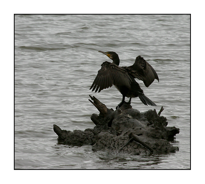 le-cormoran-1169722079